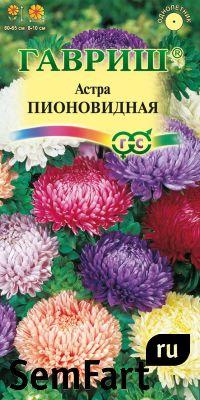 Астра семена фото - Фото цве…